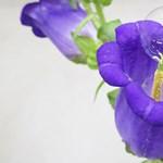 Méhek helyett szappanbuborékokat kilövő drónnal végzik a beporzást japán tudósok