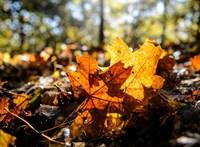 Csendes őszi idő vár ma