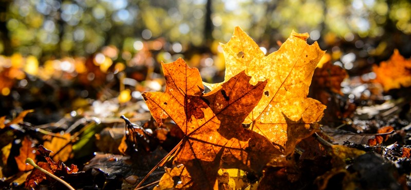 Ma is szebbik arcát mutatja az ősz, akár 25 fok is lehet