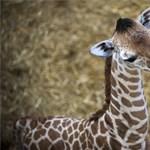 Megdöbbentő és elszomorító hír jött a kenyai vadállatokról