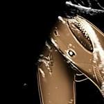 Ilyen ultrahangot nem látott: íme terhesen a világ egyik legveszélyesebb cápája