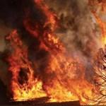 Olyan meleg van, hogy erdőtüzek pusztítanak Portugáliában és Spanyolországban
