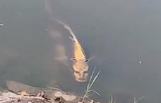 Bizarr videó került elő Kínából, gyorsan terjed a kínai emberarcú halas felvétel