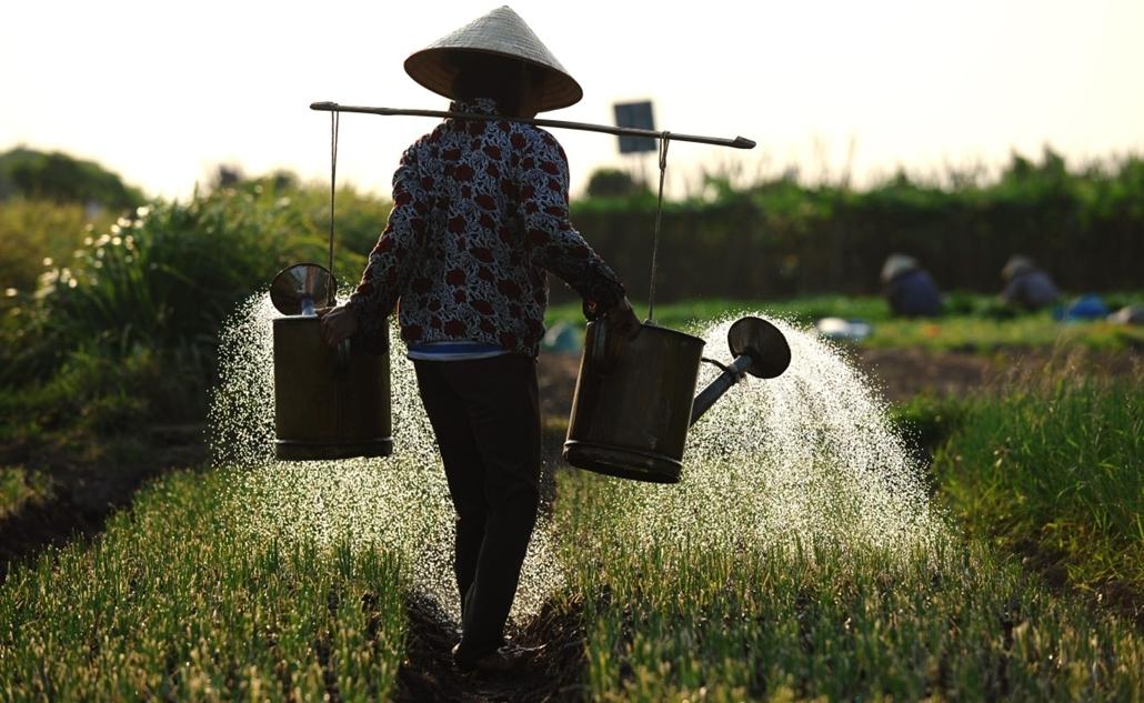 afp. hét képei - Khoai Chau, Vietnam, 2014.09.29. öntözés, mezőgazdasági termelés