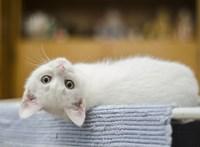 Félmilliárddal támogatja a kormány a falusi kutyák és macskák ivartalanítását