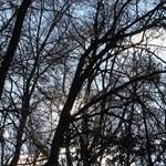 Mától lehet menni szalonnát sütni az erdőbe