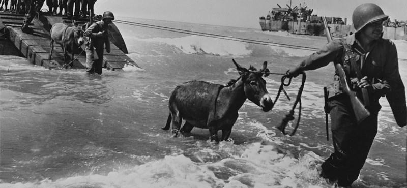 Husky-hadművelet: helyi maffiózók is segítették a szicíliai partraszállást