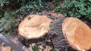 Parkolót adott cserébe, így mentett meg egy kivágásra váró fát a II. kerület