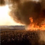 Videót közölt a katasztrófavédelem a pusztító farmosi nádastűzről