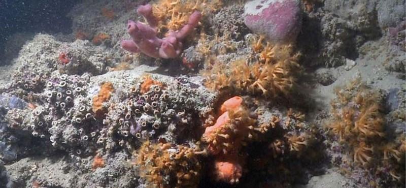 Mesterséges korallzátonyokat nyomtatnának 3D-ben