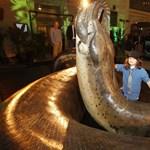 Videó: a világ eddig ismert legnagyobb kígyója