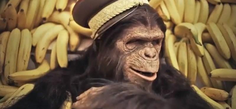 Videó: Kiakaszthatta Pokorniékat az orbánul beszélő majom