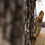 Amerikában olyan hideg van, hogy ez a mókus megfagyott egy fán