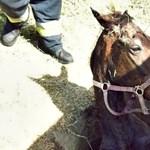 Fotó: Csak a feje látszott ki a gödörbe esett lónak, a tűzoltók szedték ki