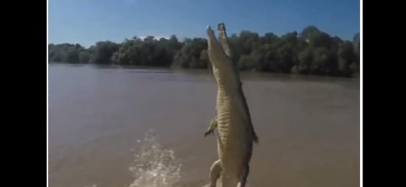 Hogy került három krokodil ebbe az iskolába?