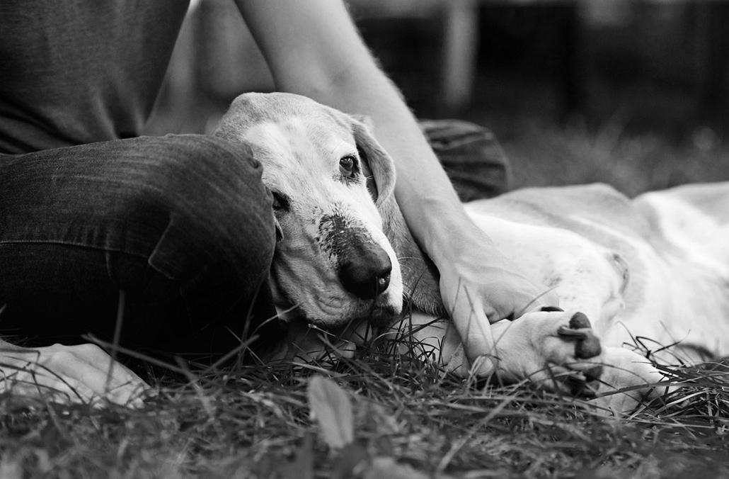 NE használd, nagyításhoz kértük!!! - kutyák altatás előtt - simon-33