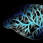 Megdőlt a feltételezés, mégsem komplexebb az agyunk az állatokénál