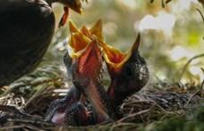 Kivágták a nádat Vecsésen, elnémult a madárdalos környék