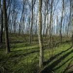 Négy kihagyhatatlan tavaszi program a barlangászástól a falusi húsvétig