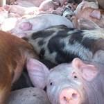 Nagy áremelésre készülnek a húsiparosok, a vásárlók megértését kérik