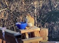 Ez a mókus csúnyán berúgott