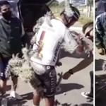 Több ezer tüskét szedtek ki a kaktuszba esett biciklisből
