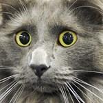 Hülyét csinált megmentőjéből egy aknába pottyant macska – videó