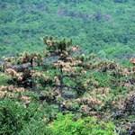 Százötven millió hektár erdő telepítését tervezik 2020-ig