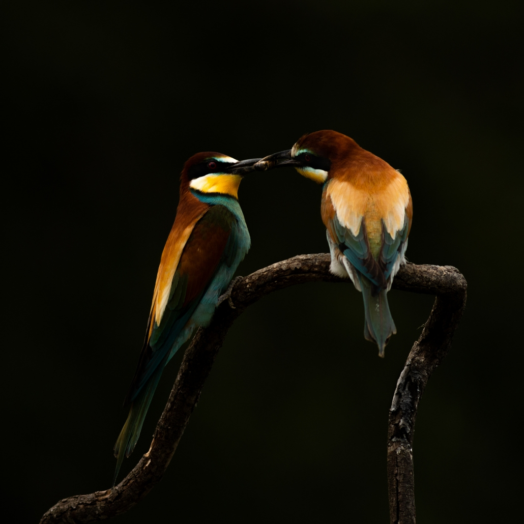 NE HASZNÁLD Varázslatos Magyarország természetfotó kiállítás Ajándék - Duna–Dráva Nemzeti Park ~ Völgyi István