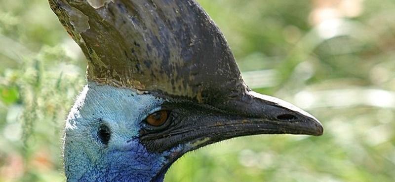 Saját madara ölt meg egy férfit az Egyesült Államokban