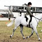 Új tantárgy az általános iskolákban: tényleg kötelező lesz a lovasoktatás?