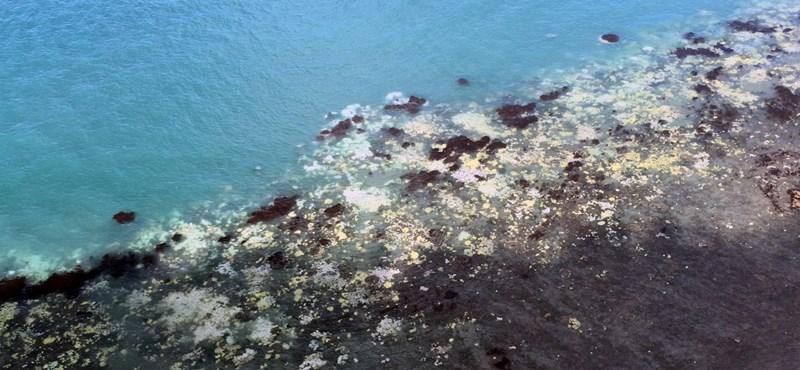 Példátlan pusztulás sújtja az ausztrál Nagy-korallzátonyt