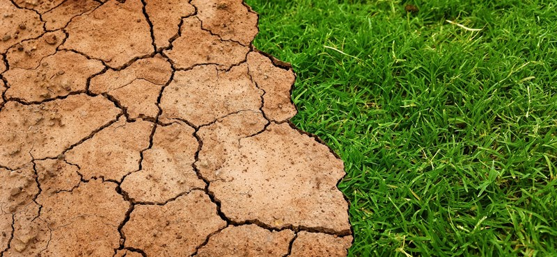 Kongatják a vészharangot: 500x gyorsabban pusztulnak a növények, mint kellene