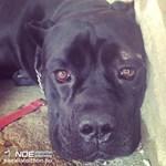 Kilencszer fejbe lőttek légpuskával egy kutyát Kabán
