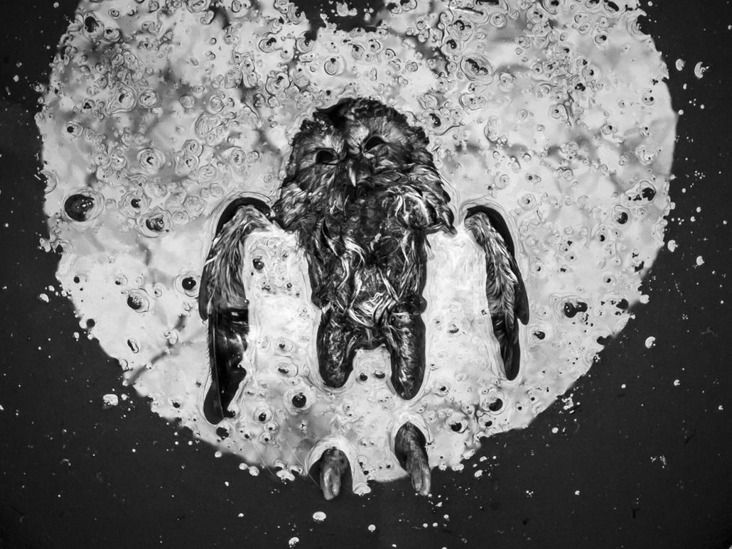 NE HASZNÁLD! - canon év természetfotósa, 2015 természetfotó, I. Kezünkben a Föld - Éjjeli áldozat