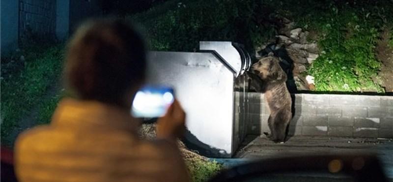 Medve támadt egy magyar zarándokra Erdélyben
