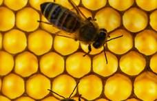 Adómentesen lehet méhészeti termékeket árulni