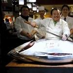 185,5 millió forint egy tonhalért