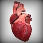 Tudja, hol a tüdeje és a szíve? És a mellékveséje? – Tesztelje tudását!