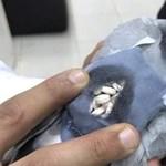 Drogcsempész galambot fogtak Kuvaitban