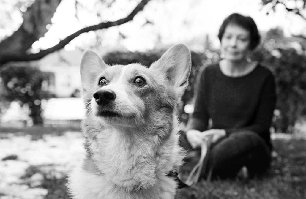 NE használd, nagyításhoz kértük!!! - kutyák altatás előtt - houdini--625