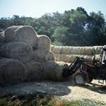 Mezőgazdaságot oktatna az iskolákban egy magyar képviselő