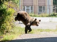 Fadarabokkal dobálta meg a barlangot a halálos székelyföldi medvetámadás áldozata