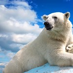 Jegesmedve tépett szét egy embert a Spitzbergákon