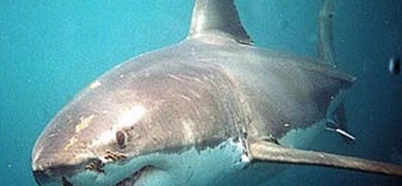 Levideózták, ahogy szörfösöktől egy köpésre vadászgat egy cápa