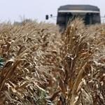 MSZP: 35 milliárd forint agrártámogatástól eshet el az ország