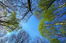 Ahol meg tudják óvni a kibontott fákat: Varsóban a gyökeret öntözik