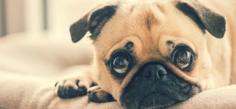 Kiderült: tudatosan vágnak fejeket a kutyák