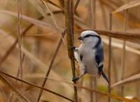Új madárfaj érkezett Magyarországra – fotó