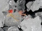 Veszélyesen alábecsülték az óceánok mikroműanyag-szennyezettségét